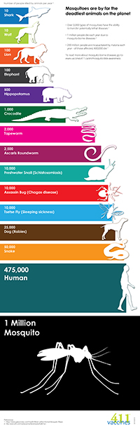 Animals's Infografic