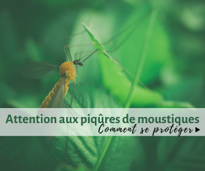 Attention au piqûres de moustiques